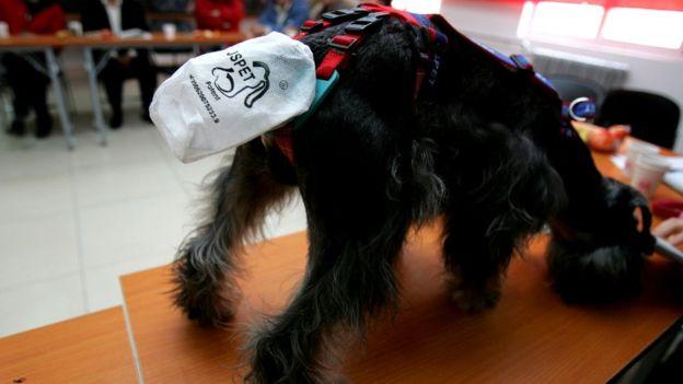 специальные пакеты, позволяющие контролировать поведение собаки