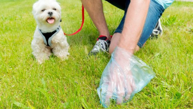 Уборка собачьих экскрементов - не самое приятное занятие, но кто-то должен это делать