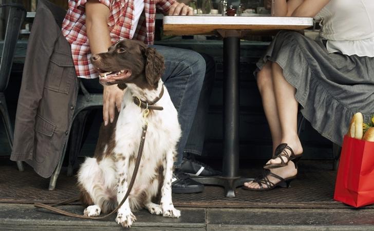 Совладелец Svobody, 4 Павел Соловьев говорит, что их заведение никогда не было не «dog friendly».