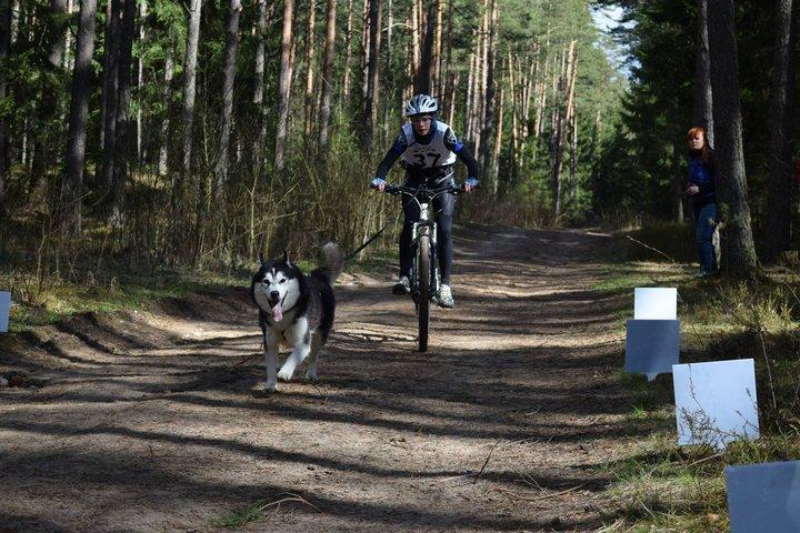 Участвовать в гонках на собаках по бесснежным видам ездового спорта